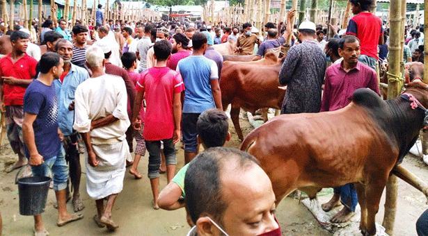 কুমিল্লায় কোরবানির হাট