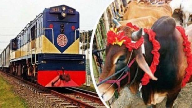 train-cow